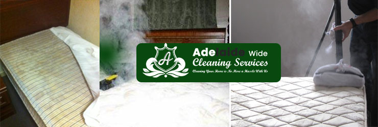 Mattress Steam Cleaning Shea-Oak Log